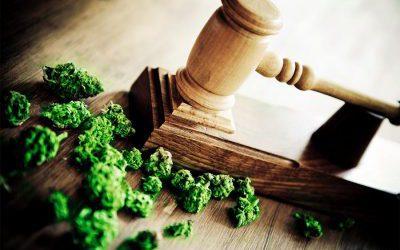 Voor wie is Cannabis geschikt